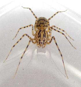 Terroris e par une araign e elle met le feu la maison for Araignee de maison