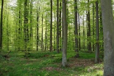 Un sdf viole une jeune fille de 14 ans dans les bois - Un matin dans les bois ...
